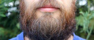 скорость роста бороды